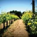 Vinho da Península de Setúbal